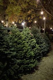 Dillards Christmas Tree Farm by 578 Best All Things Holiday Images On Pinterest Best Mother