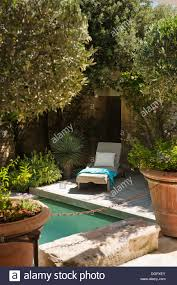 Sun Lounger On Wooden Pool Deck Seen Through Potted Olive Trees