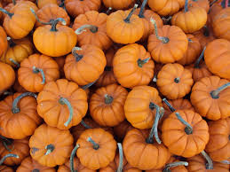 Ohio Pumpkin Festivals 2017 by 14 Pick Your Own Pumpkin Patches In The Tri State Cincy Weekend