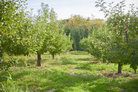 Rileys Pumpkin Patch Oak Glen by Apple Picking Season Oak Glen Ca Sirens U0026 Scoundrels