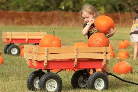 Pumpkin Patch Daycare Fees by Fall Fun Area Children Visit Tupelo Buffalo Park And Zoo For