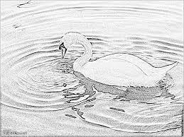 Coloriage Cygne 011 à Imprimer Pour Les Enfants Dessin Oiseau