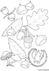 Free Leaf Coloring Page Pages 13 Printable