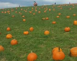 Great Pumpkin Patch Frederick Md by Pumpkin Patch Maryland