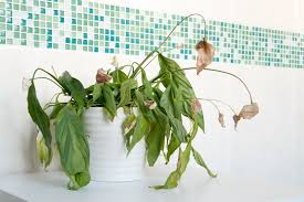 Good Plants For Windowless Bathroom by 16 Best Plants That Thrive In Your Bathroom