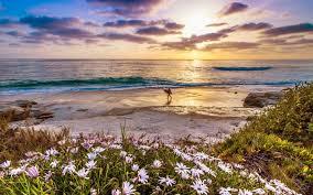 California Beach 798014