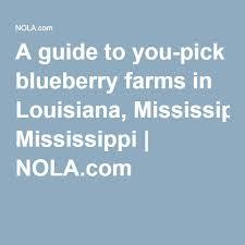 Pumpkin Patch Kiln Mississippi by Nesbit Blueberry Plantation Nesbit Mississippi Go Blueberry