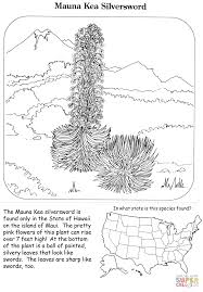 Click The Mauna Kea Silversword Coloring Pages To View Printable Version Or Color It Online Compatible With IPad And Android Tablets