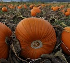 North Plains Pumpkin Patch by Portland Area Pumpkin Patches The Pumpkins Are Only The Beginning