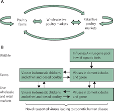 Asymptomatic Viral Shedding Influenza by Interventions To Reduce Zoonotic And Pandemic Risks From Avian