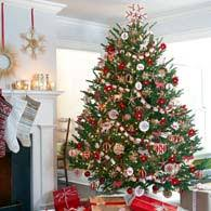 Christmas Tree Farm Near Lincoln Nh by Weir Tree Farms Colebrook New Hampshire Balsam Fraser And