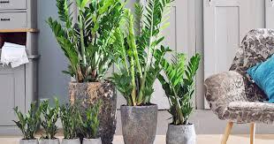 pflegeleichte zimmerpflanzen die besten arten mein