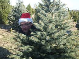 Luers Christmas Tree Farm by Jamie Janosz Finding The Perfect Christmas Tree