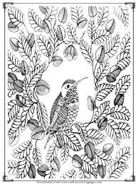 Bird Printable Stress Relief Coloring Pages Adults