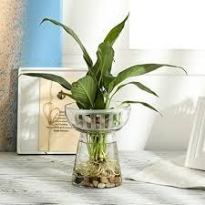 flower pot klarglas grüne hydrokultur vase fish tank wasser