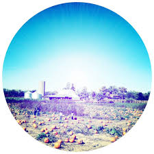 Powell Ohio Pumpkin Patch by Circle S Farms 17 Photos U0026 22 Reviews Local Flavor 9015