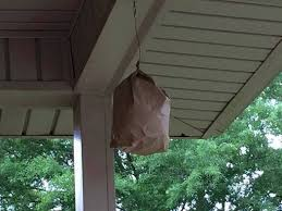 keep wasps away with a brown paper bag the wasps and yellow
