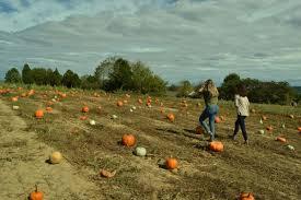 Lane Farms Pumpkin Patch by Pumpkin Patches Corn Mazes Fall Fun Oh My Lifestyle