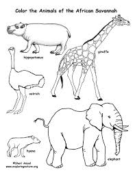 Savanna African Animals Coloring Page Exploring Nature