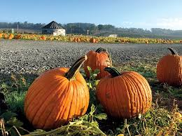 Grims Greenhouse Pumpkin Patch by Haunted Lv Where To Get Scared Lehigh Valley Style