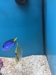 Petco Fish Aquarium Decorations by Beyond Upset Over These Petco Fish Reef2reef Saltwater And Reef