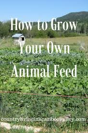 Best 25+ Pig Feed Ideas On Pinterest | Pig Farming, Pig Pen And ... Pin By Pat Wozniak On Pork Pinterest Business Planning Afc Pig Farm Ecomavrovic How To Raise Pastured Pigs Without Buying Feed Httpwww Tammi Jonas Food Ethics Farming Plan Sample Dsc Raising Pros Cons The Prairie Homestead Figueroa Breeding Gguinto Bulacan Youtube Gloucestershire Old Spot Pigs And That Farm There Was To Make Your Own Pig Feed The Organic Farmer Heaven What Makes Free Range Different Downtoearth 54 Best Images Farming Backyard In Nigeria Detail Post Practical Traing Its Time Front Yard Farmer