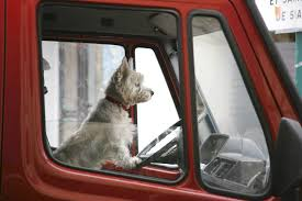 A Food Truck For Dogs Is Making Its Way Through California A Food Truck For Pets Is Coming To Boston Magazine Dogs Die Falling Off Pickup Trucks Trucking With A Dog What Drivers Should Know About Furry Pickups Pickup Truck Dog Rudy Photograph By Tara Cantore Blue Wall Art Bromi Design Pick Up Pal Cool Stuff Driving Behind The Steering Wheel Of Lorry Stock Debbis Front Porch Dawgz The Dangers In Beds 1800petmeds Cares Novel Four Bites Hc Thrifty Teachers