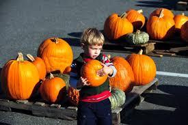 Old Auburn Pumpkin Patch by Fun Family Guide To The Best Pumpkin Patches Cbs13 Cbs Sacramento