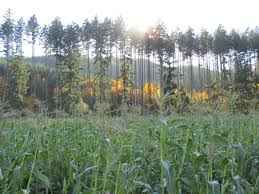 Portland Pumpkin Patch Corn Maze by Pumpkin Patch Portland Hillsboro Forest Grove Banks Seaside