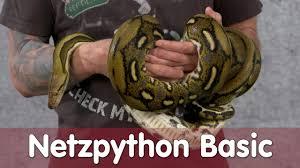 reptil tv folge 99 netzpython basic