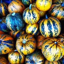 Varieties Of Pumpkins by Fun Pumpkin Varieties