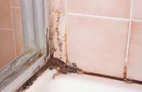 get rid of black mold and mildew in shower grout orange mold