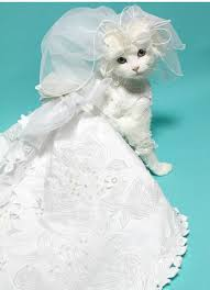 cat wedding dress pered pets pered pets white