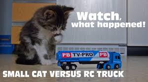 Small Cat Vs RC Truck - YouTube Mega Rc Model Truck Collection Vol3 Mb Arocs Scania Custom Peterbilt Show Truck Youtube Jrp How To Make A Rc Tonka Dump Hymer Camper Caravan Wohnmobil Radio Remote Controlled Boat Bike Trailer Combo With Leds Best Of Machines Loader Fire Engines Buy Cobra Toys Monster 24ghz Speed 42kmh Remote Control Guy Zig Zags 20 Spins Sand Pleasant Toy Car Container Trailler Kids Cars Adventures 4 Scale 4x4 Trucks In Action On Mars Nope Traxxas Ford F150 Raptor Svt 2wd Rc Car Rampage Mt V3 15 Scale Gas