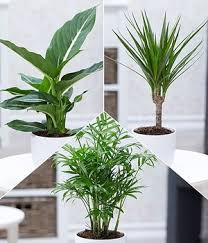 12 luftreinigende pflanzen the green corner