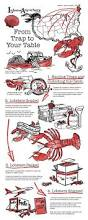 Decorative Lobster Traps Small by Best 25 Lobster Delivery Ideas On Pinterest Planes Aircraft
