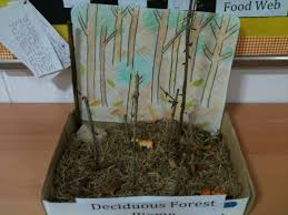 Earth Floor Biomes Desert by Temperate Deciduous Forest Pyp Sharing The Planet On Ecosystems
