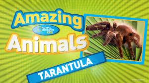 Do Tarantulas Shed Their Legs by Tarantula