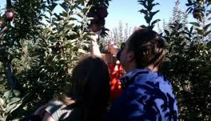 Pumpkin Picking Nj 2015 by Apples Peaches Pumpkin Pie Where To Pick Your Own Fresh Fruit In