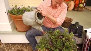 planting tulip bulbs in containers at home with p allen smith
