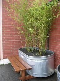 planting bamboo in a pot bamboo the best containers to grow bamboo in
