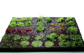 Layout 85 - Ian Holdich - Tropica Aquarium Plants Aquascaping Lab How To Mtain Trimming Clean And Change Aquascape Pinterest Red Rock Journal By James Findley The Green Machine Pennywort Brazilian Aquatic Plant Google Search Aquascaping Giuseppe Nisi Giuseppe_nisi_aquascaping Instagram Aquarium Sand Layouts Nature For Simons Blog Layout Ideas Tag Layout Aquascape Marcel Dykierek Aqua Rebell Shaping I Undaterworlds 85 Ian Holdich Tropica Plants