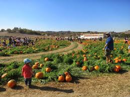 Cal Poly Pomona Annual Pumpkin Patch by I Luv Frames October 2013