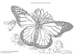 Monarch Butterfly Colorin Simple Coloring Pages