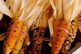 Pumpkin Patch Fresno Ca News by Dutch Hollow Farms