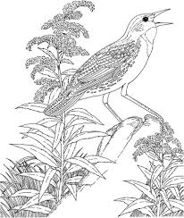 Meadowlark With Goldenrod Nebraska State Bird Singing Activity Coloring Page
