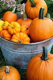 Hillcrest Farms Pumpkin Patch by 186 Best Sweet Pickins Pumpkin Patch Images On Pinterest Autumn