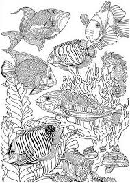 Detailed Sea Fish To Colour Colouring For Adults