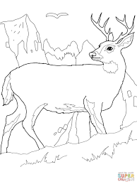 White Tailed Deer Coloring Page Tail Free Printable Pages For Kids