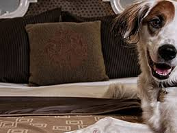 Pampered Pets Bed And Biscuit by Poochet Sound Mapping Seattle U0027s 13 Pet Friendliest Hotels